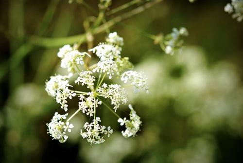 Helen Agarwal - flowers