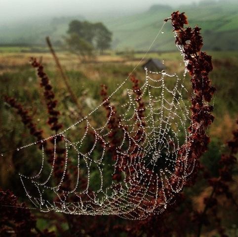 Helen Spider Web